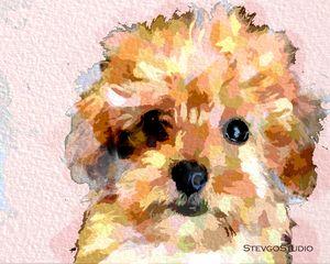 Cute puppy A1277