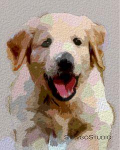Cute puppy A1278