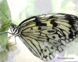 Butterfly B02029