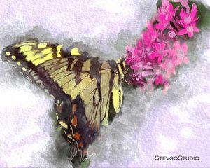 Butterfly B02030