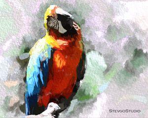 Colorful Bird B02054