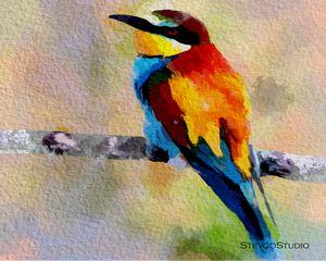 Colorful Bird B02057