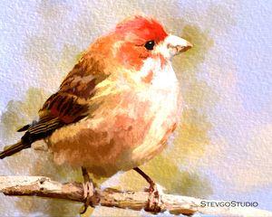 Colorful Bird B02058
