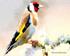 Beautiful Birds B02060