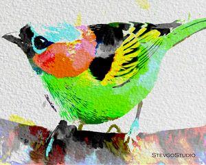 colorful Bird B02050