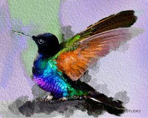 Colorful Bird B02052