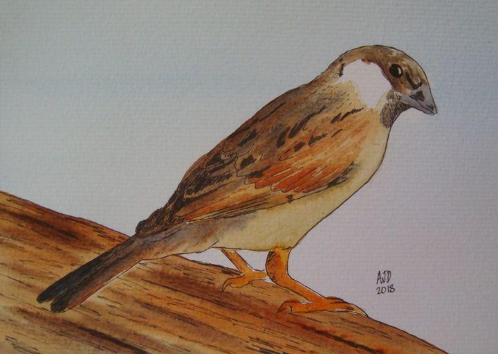 Perching Sparrow - Adam Darlingford