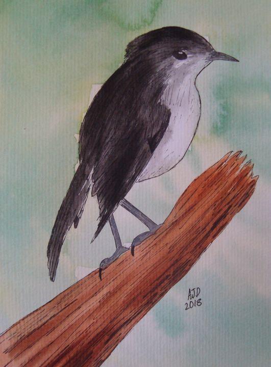 North Island Robin - Falcon Peak Gallery