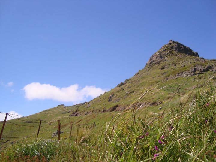 A sunny day on the Port Hills - Adam Darlingford