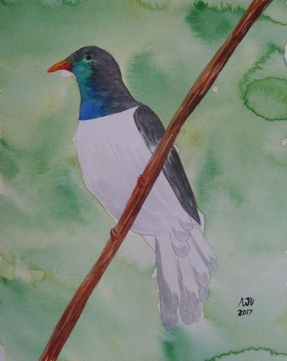 Lone kererū (native wood pigeon) - Adam Darlingford