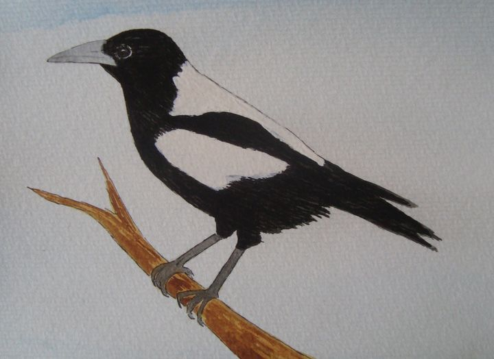 Magpie on a Branch - Falcon Peak Gallery