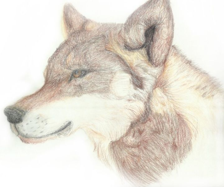 Wolf Head - Bxri's Art
