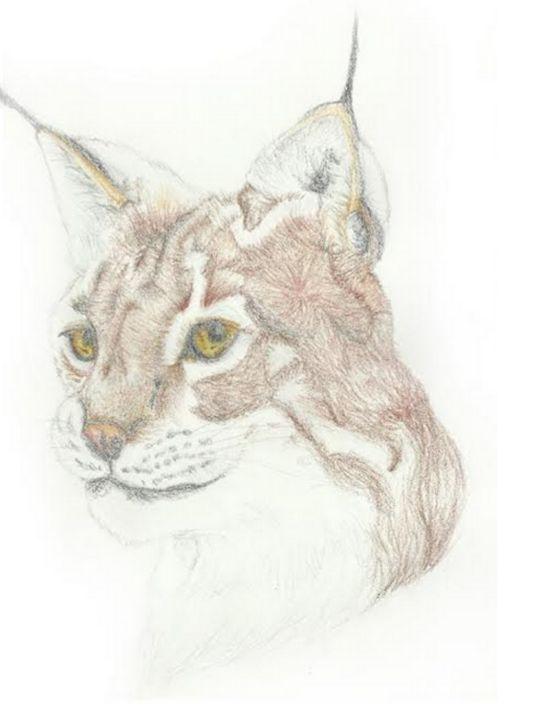 Lynx Head - Bxri's Art