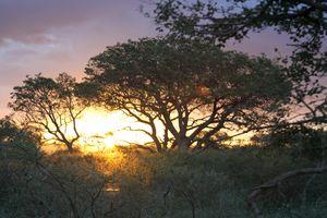 Sunset in the bush