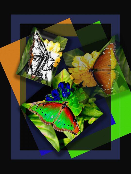 buttterflies - blackqueen50