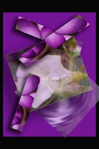 purple petla - blackqueen50