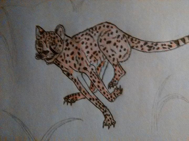 Cheetah - PITBULL