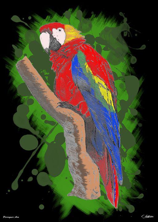 Perroquet Ara - C.Tellier