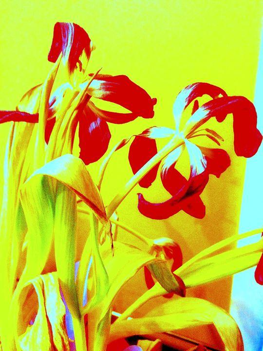 The  color - Nader Fahami