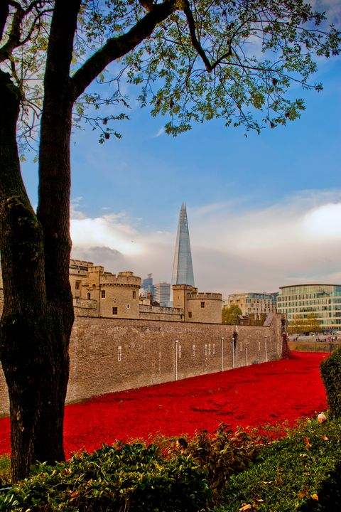 Tower of London poppies poppy - Andy Evans Photos