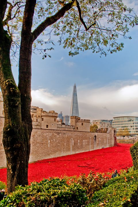 Tower of London poppy Seas of Red - Andy Evans Photos