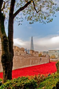 Tower of London poppy Seas of Red