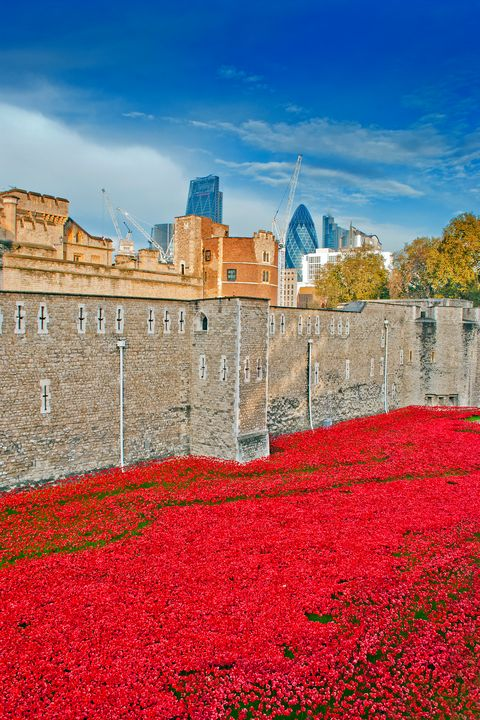 Tower of London poppy Blood Swept La - Andy Evans Photos