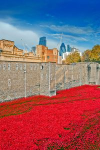 Tower of London poppy Blood Swept La