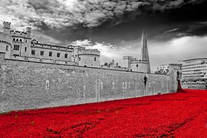 Tower of London Poppy Poppies