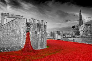 Tower of London Red Poppies