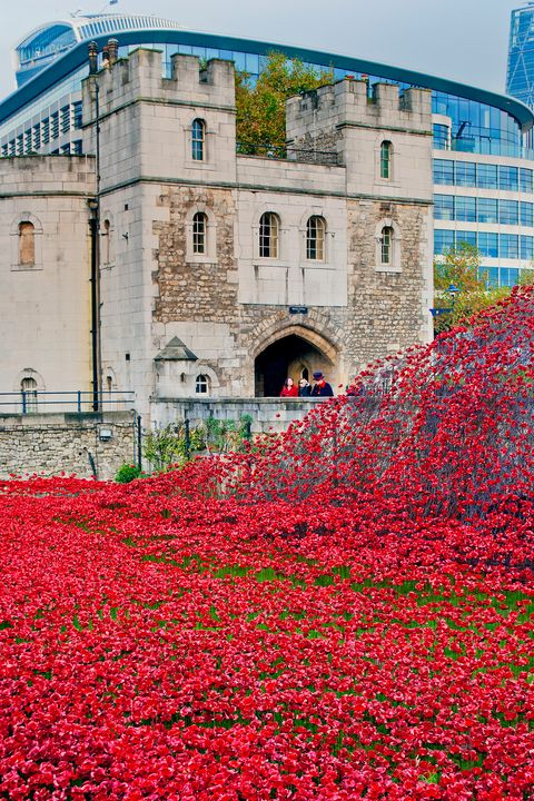 Tower of London poppy poppies - Andy Evans Photos
