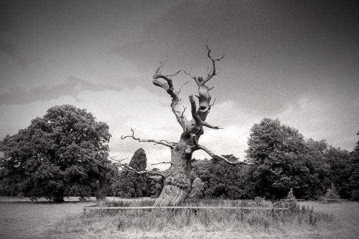 Old Tree Westonbirt Arboretum - Andy Evans Photos