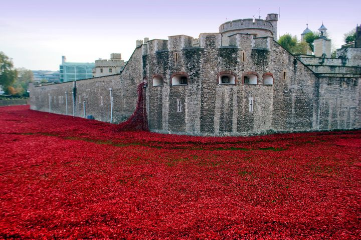 Tower of London Red Poppies - Andy Evans Photos