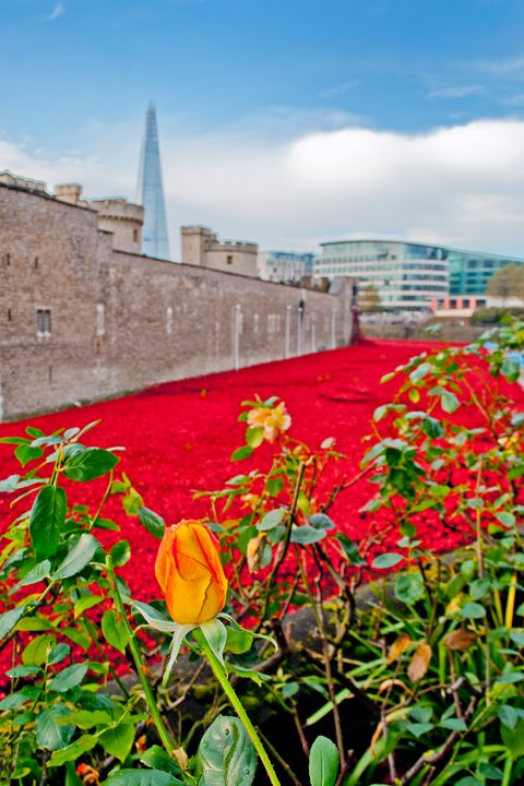 Tower of London Poppy - Andy Evans Photos