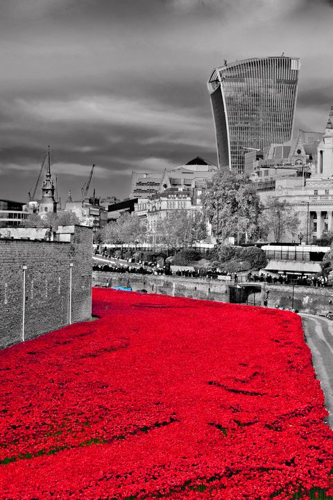 Tower of London Poppies - Andy Evans Photos