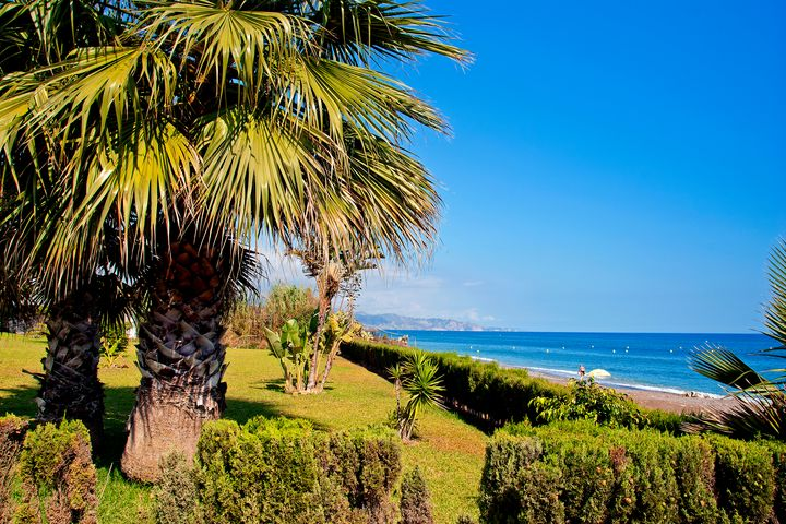 Palm trees Torrox Costa Spain - Andy Evans Photos