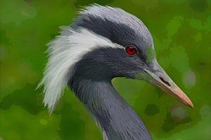 Crane Bird Portrait - Dori Marie