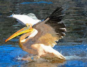 Pelican - Dori Marie