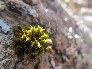 Tree's Moss