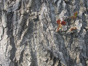 "Tree Bark ""Wallpaper"""