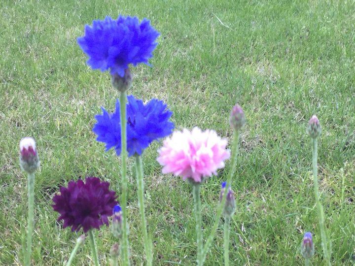 Flowering summer - The Art of Richard Gallacher