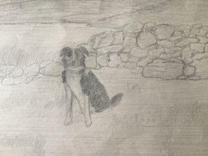 Sheepdog by the Loch