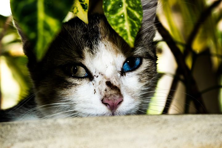 Cat hides in flower Pot - Alexjos