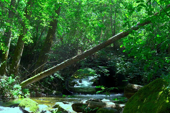 Creek Bend - Nathan Olsen photography
