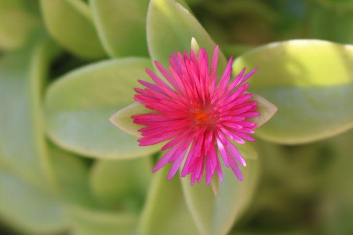 Flower - Paige Van Dyke