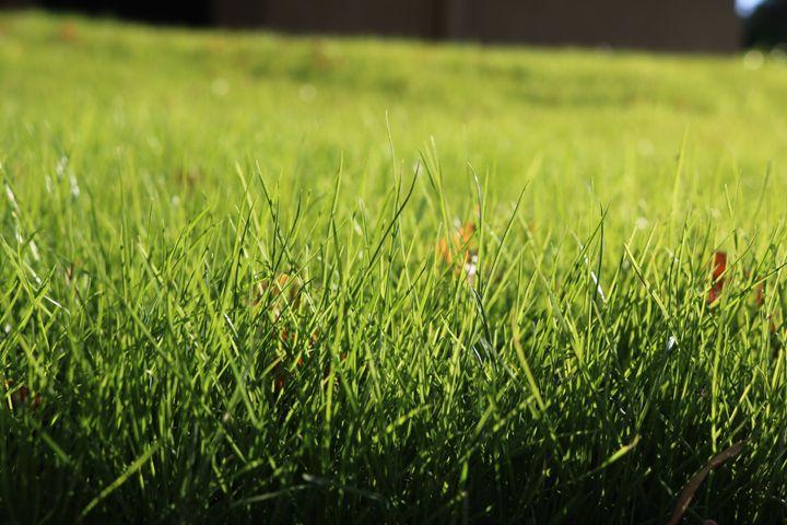 Grass - Paige Van Dyke