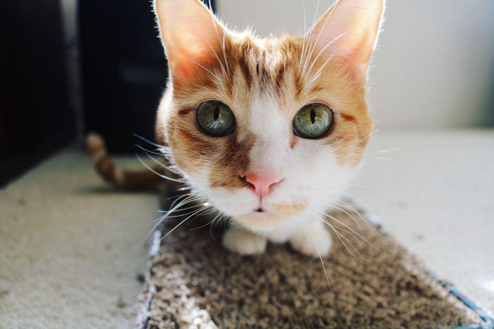 Cat - Paige Van Dyke