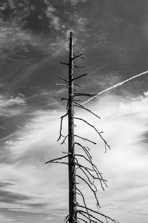 Dead tree - Tommer Rissin