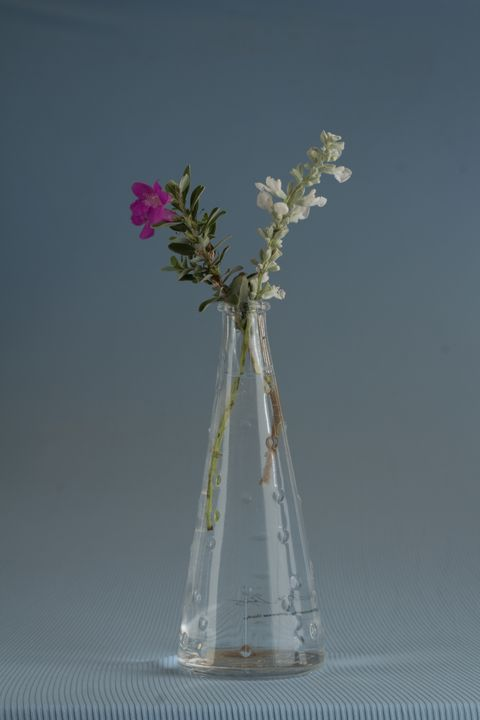 Flowers in vase - Tommer Rissin