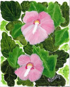 Common Rose Mallow